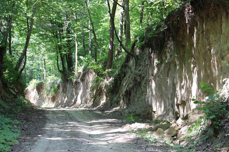 Wąwozy lessowe w Szczebrzeszynie